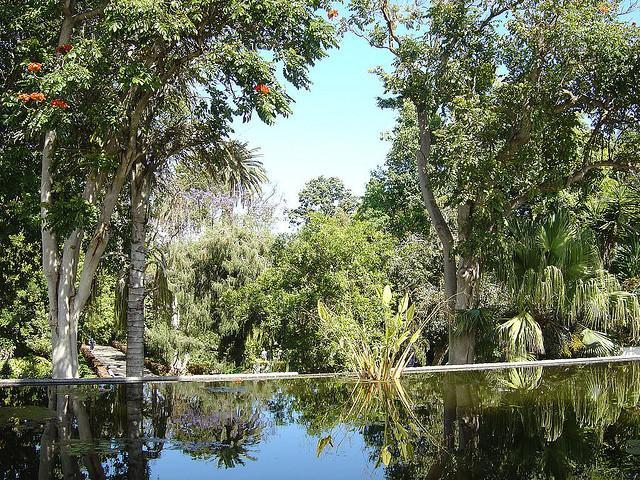 The jardin botanico municipality of puerto de la cruz - El botanico puerto de la cruz ...